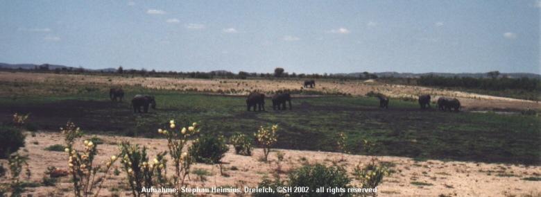 Elefantenpanorama